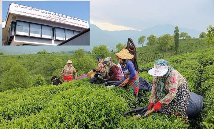 در سال حمایت از کالای ایرانی، عرضه چای در بورس کالای منطقه آزاد انزلی برای نخستین بار در کشور