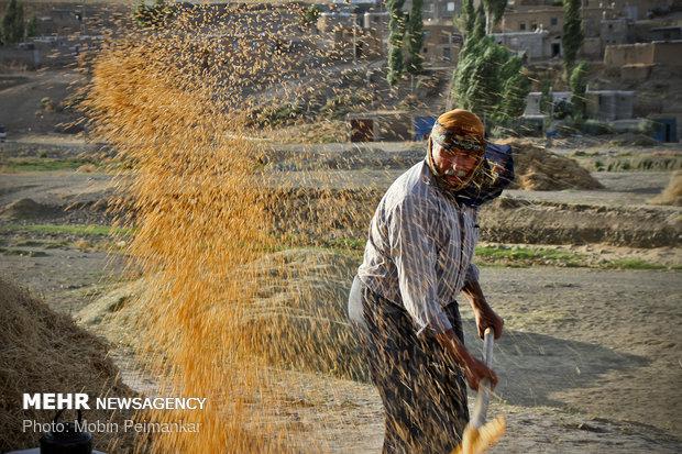 هشداردرباره تشدید قاچاق گندم/هزینه واردات ۲برابر خرید تضمینی است - خبرگزاری مهر   اخبار ایران و جهان