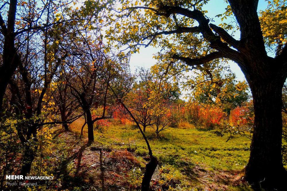 جادوی پاییز در «کوچه باغی»؛ در تابلوی هزار رنگ طبیعت قدم بزنید - خبرگزاری مهر | اخبار ایران و جهان